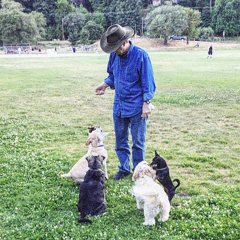 Dogs Robert Park